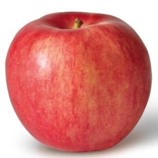 vocne-sadnice-jabuka-ajdered-ajdared-idered