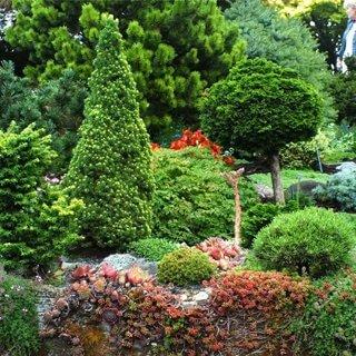 Ukrasni grmovi