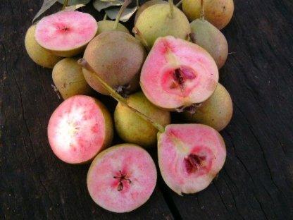 vocne-sadnice-kruske-lubenicarka