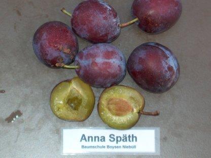 vocne-sadnice-sljiva-ana-spet-anna-spath-3