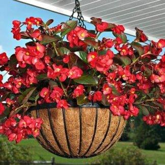Sezonsko cveće