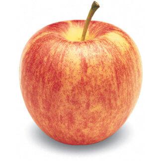 vocne-sadnice-jabuka-gala-2