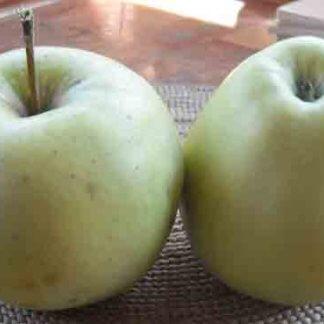 vocne-sadnice-jabuka-kolumbija